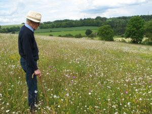 A man in a wildfolower meadow